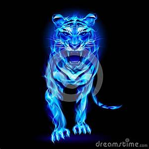 Blue Fire Tiger. Stock Photography - Image: 33566642