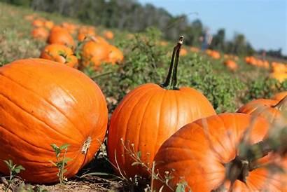 Pumpkin Patch Wallpapers Fall Autumn Halloween Backgrounds