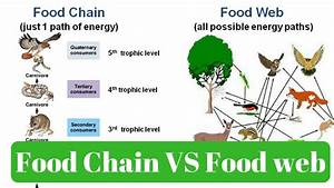 Environment  U0026 Ecology - Food Chain  U0026 Food Web