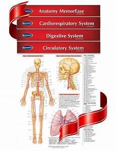 Medical And Anatomy Charts