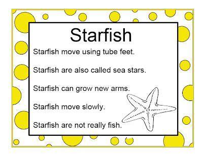 brilliant bundles preschool starfish activities for an 915 | 73079143350c18c3a1d7ded0ca6704fc