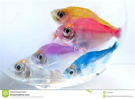 aquarium poisson d or poissons d aquarium photos stock image 21238233