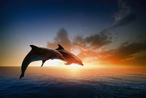 deco chambre femme poster dauphin décoration murale mammifère de l 39 océan