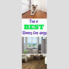 What's The Best Flooring For Dogs?  Flooringinc Blog