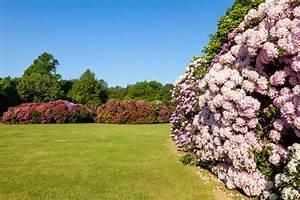 Hortensien Vermehren Durch Stecklinge : rhododendron vermehren mit einem ableger leicht gemacht ~ Lizthompson.info Haus und Dekorationen