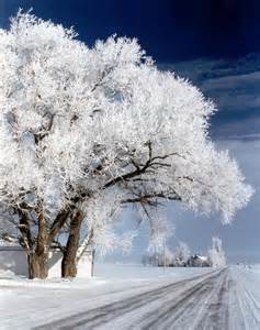 North Dakota Winter Trees