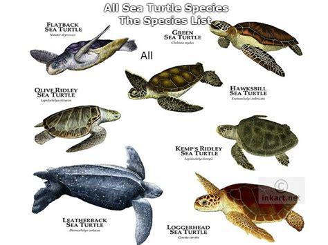 All Sea Turtles Species