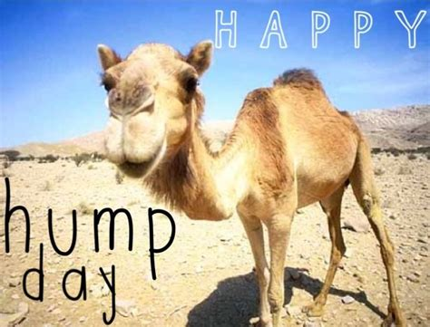 Hump Day Camel Meme - happy hump day quotes quote days of the week wednesday humpday hump day camel wednesday quotes