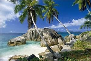 Bilder Meer Strand : palmen bilder ab 9 90 online bestellen gratisversand posterlounge ~ Eleganceandgraceweddings.com Haus und Dekorationen