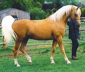 Top 20 Most Beautiful Horses In The World | Beautiful ...