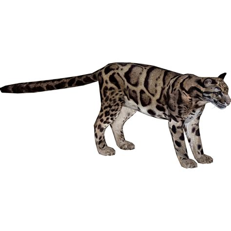 clouded leopard mibound zt  library wiki