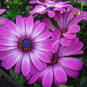 Hängende Blumen Balkon by Balkonpflanzen Lexikon Pflanzen Auf Dem Balkon