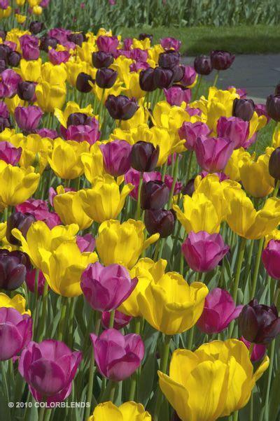 43911 best jardineria images on flowers
