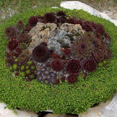 piante da vaso resistenti al freddo piante grasse da esterno adatte in vaso 3 vivaio