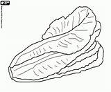 Lettuce Coloring Pages Vegetables Printable Oncoloring sketch template