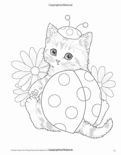 Coloring Pages Teacup Kitten Kittens Colouring Cat