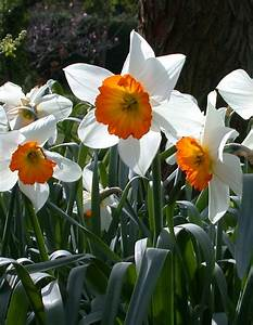 Ann's Watercolour Studio: Negative painting with daffodil ...