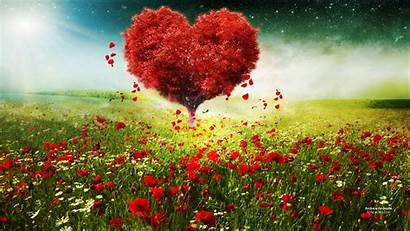 Heart Tree Wallpapers Baltana Commercial