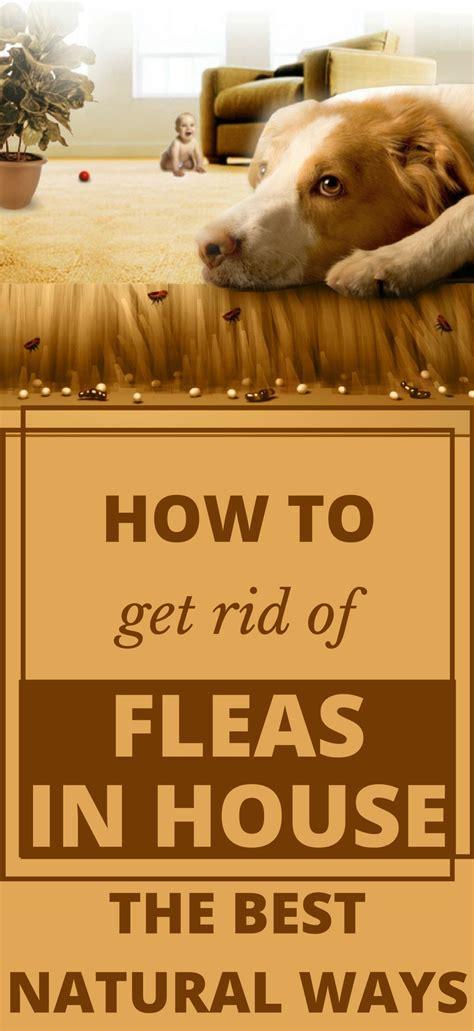 rid  fleas  house   natural ways