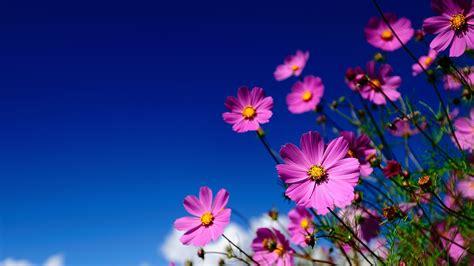 Floral Desktop Wallpaper Hd