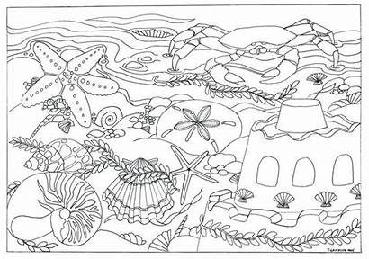 Coloring Beach Printable Scene Seashells Adults Pages