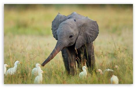 Elephant Ultra HD Desktop Background Wallpaper for 4K UHD