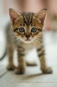 Adorable Ringtail Cat