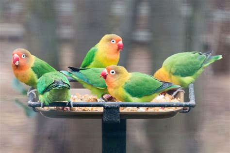 Birds of a Feather Flock Together: The Joys of Multiple ...