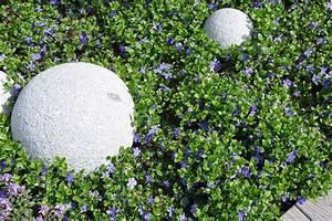 Pflanzen Sonniger Standort : bodendecker vinca minor im garten pflanzen und pflegen ~ Lizthompson.info Haus und Dekorationen