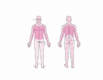 Sensation Assess Sensory Dermatomes Neurologic Examination Disorders