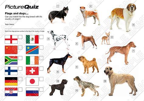dog breed dog breed quiz