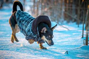 Itchy In Winter In Dogs Definition Cause Solution