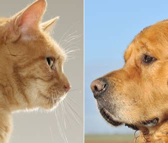 dogs  cats  pet