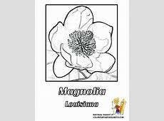 Kentucky State Flag Coloring Page AZ Coloring Pages