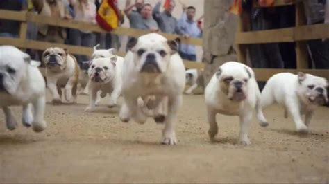 GEICO TV Commercial, 'Running of the Bulldogs' - iSpot.tv