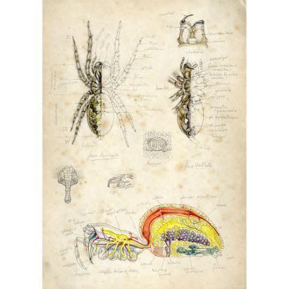 anatomie de laraignee draw  dessin insecte