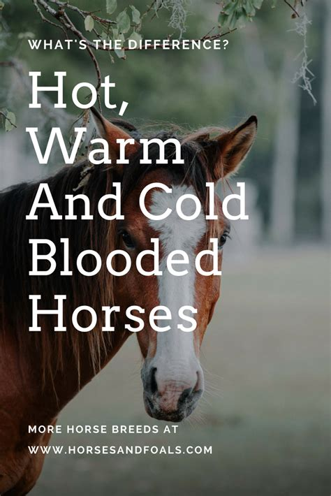 horse blooded cold warm horses breeds refer mustang