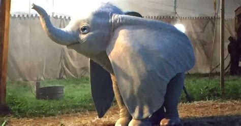 Ver HD Dumbo Película Completa Espanol y Latino Ver