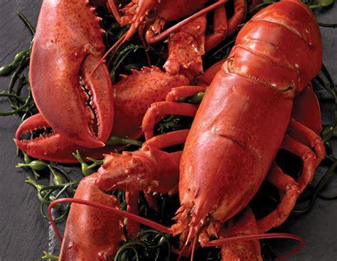 Ee  Whole Ee   Live Lobsters Delivered Legal Sea  Ee  Foods Ee