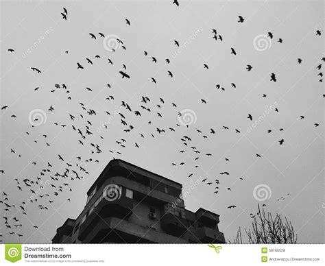 Birds Over Dark Sky Stock Photo