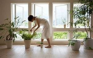 Pflanzen Für Gesundes Raumklima : zimmerpflanzen sch ne arten f r jeden standort und pflege anspruch ~ Indierocktalk.com Haus und Dekorationen