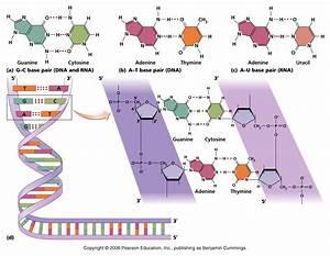 Journey To Neverland  The Biochem Chronicles
