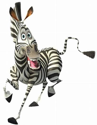 Zebra Marty Clipart Madagascar Transparent Tubes Zebre