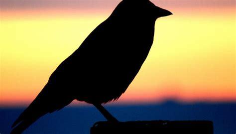 Visiem putniem, iespējams, bijis viens 'ciltstēvs' - DELFI