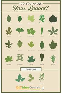 diy bedroom decorating ideas leaf identification guide diyideacenter