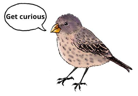 get curious bird the young darwinian