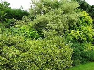 Quand Tailler Les Arbustes De Haies : massif d39arbustes pour haie basse garden amp outdoor t ~ Dode.kayakingforconservation.com Idées de Décoration