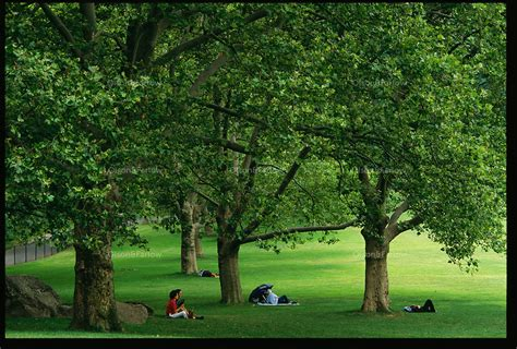 Person Sitting Under Tree in Shade