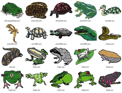 Names Of Reptiles Animals Gallery