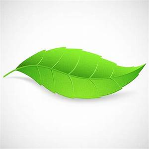 Single Leaf Logo - ClipArt Best